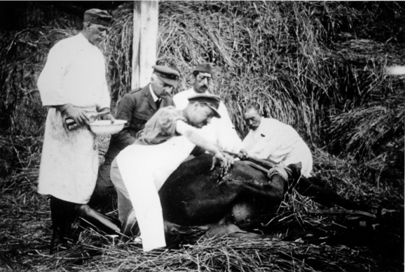 Vet and assistants operating on a horse in field conditions